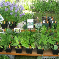 Spring Potted Plant Sale