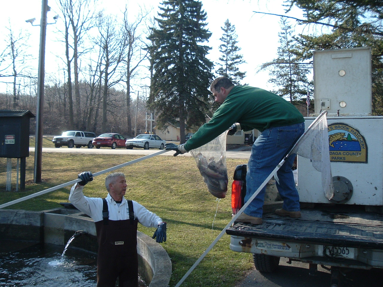 Trout Stocking - Volunteers Needed
