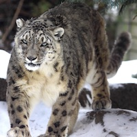 Winter at the Zoo Photo Contest